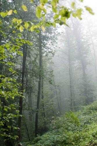 forêt des trois monts, Buffières